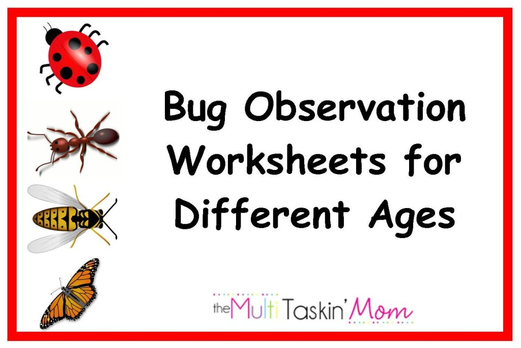 observation activity These nature observation printables are a 6 page (including cover) download for you and your children to use on your nature walks.