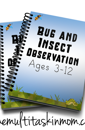 Bug and Insect Observation Notebook