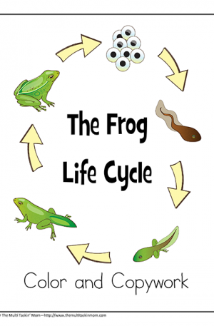 Frog Life Cycles Color and Copywork