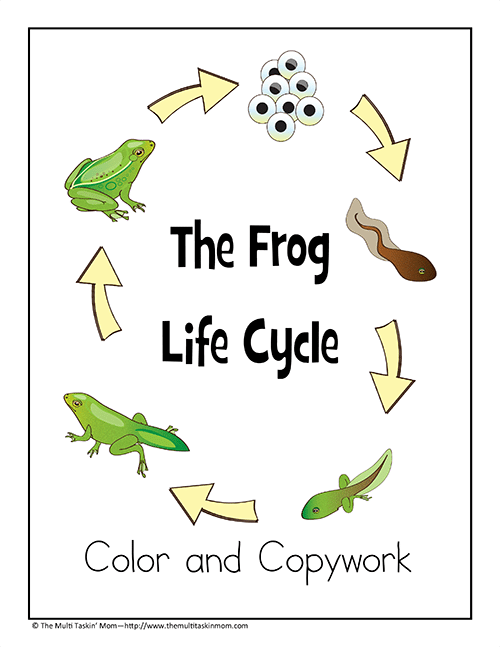 Frog Life Cycle Color and Copywork-1