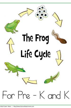 Frog Life Cycle PreK – K
