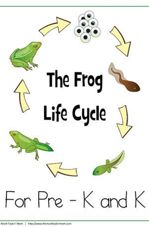 Frog Life Cycle PreK – K