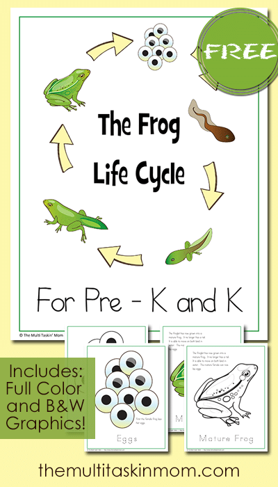 The Frog Life Cycle For Prek - K