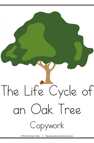 Life Cycle of a Tree Copywork M