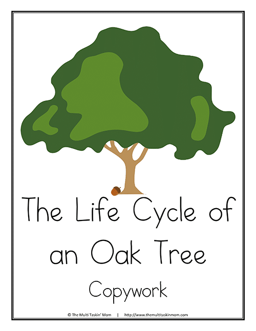 The Life Cycle of an Oak Tree-1