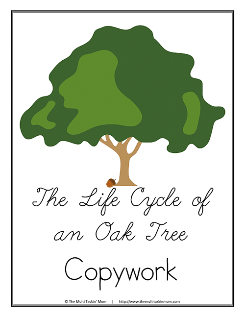 Life Cycle of a Tree Copywork C