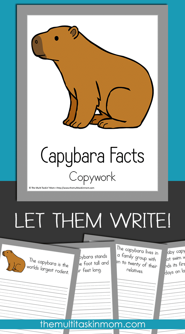Capybara Copywork is fun for any grade