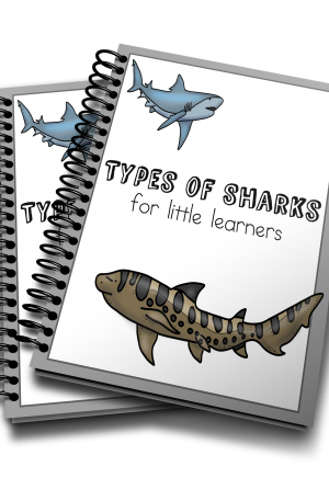 Types of Sharks for Little Learners