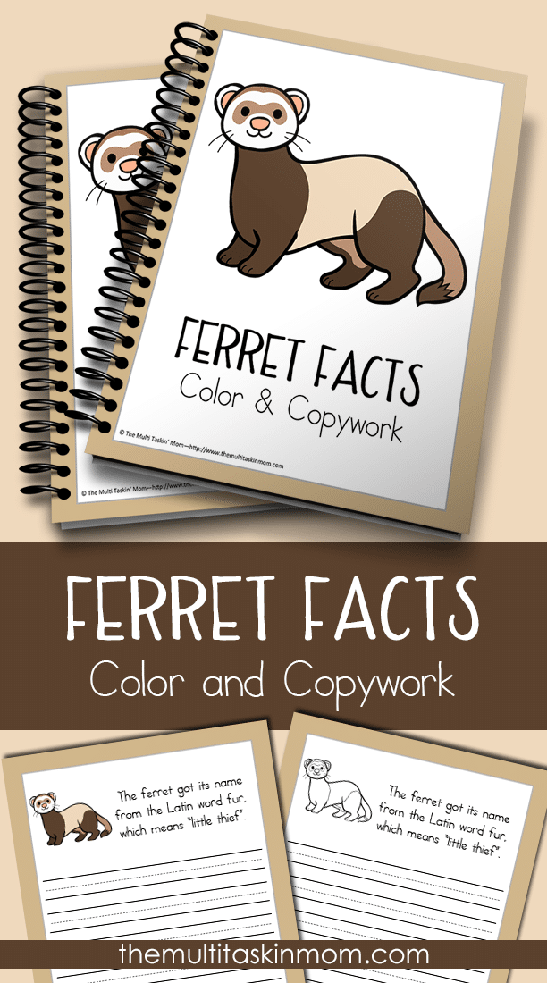 Ferret Facts Color and Copywork for all ages
