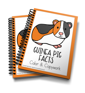 Learn all about the adorably cute critter, the guinea pig!