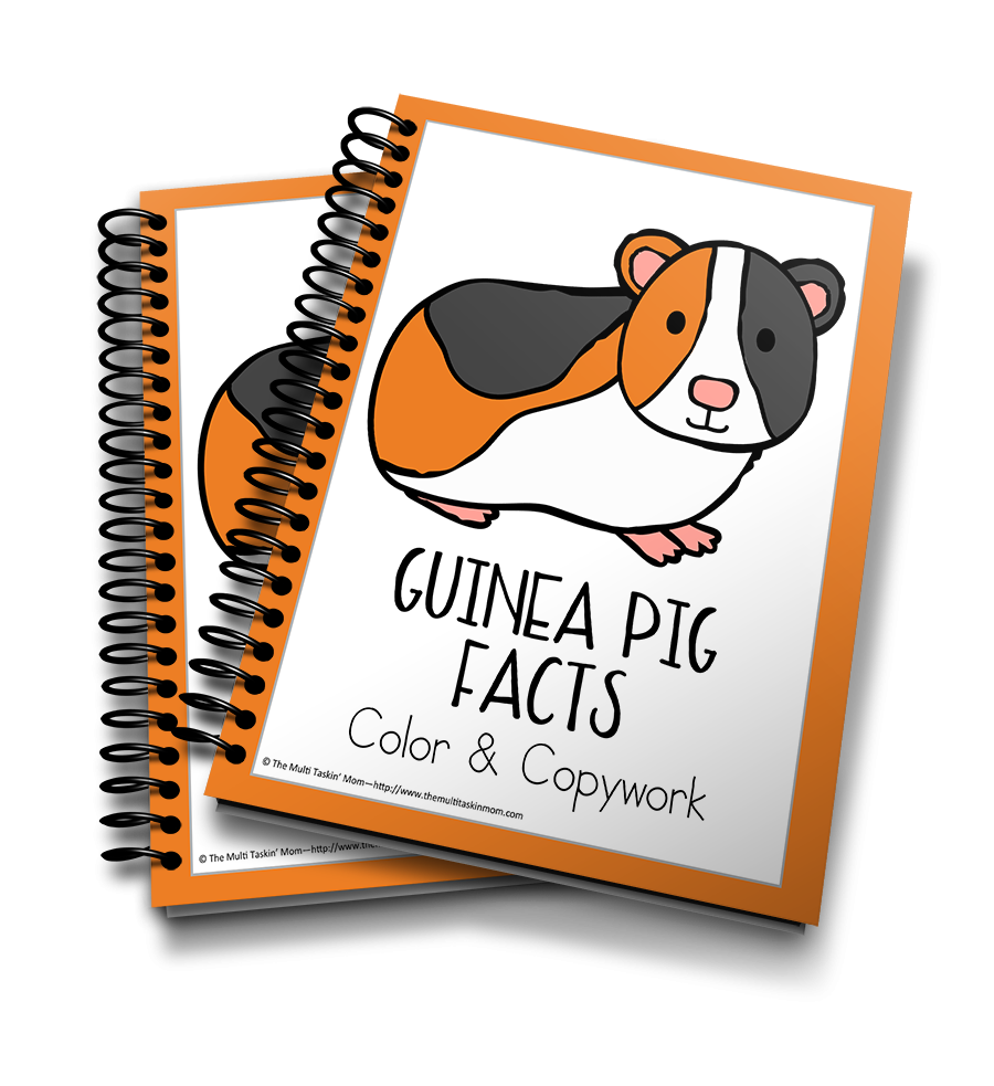 Guinea Pig Facts Color & Copywork