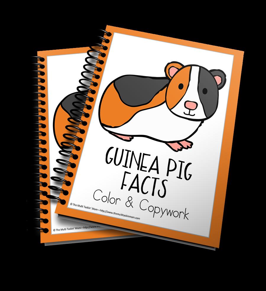 Guinea Pig Facts Color & Copywork
