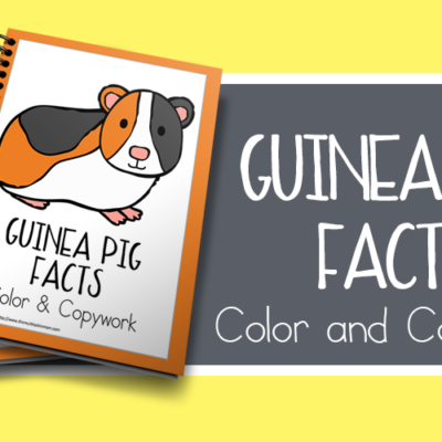 Guinea Pig Facts Color and Copywork