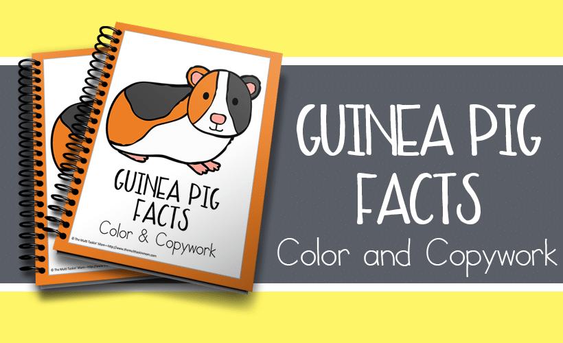 Guinea Pig Facts Color and Copywork
