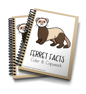 Ferrets Color and Copywork