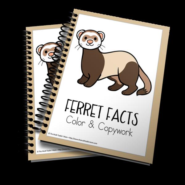 Ferrets Color and Copywork