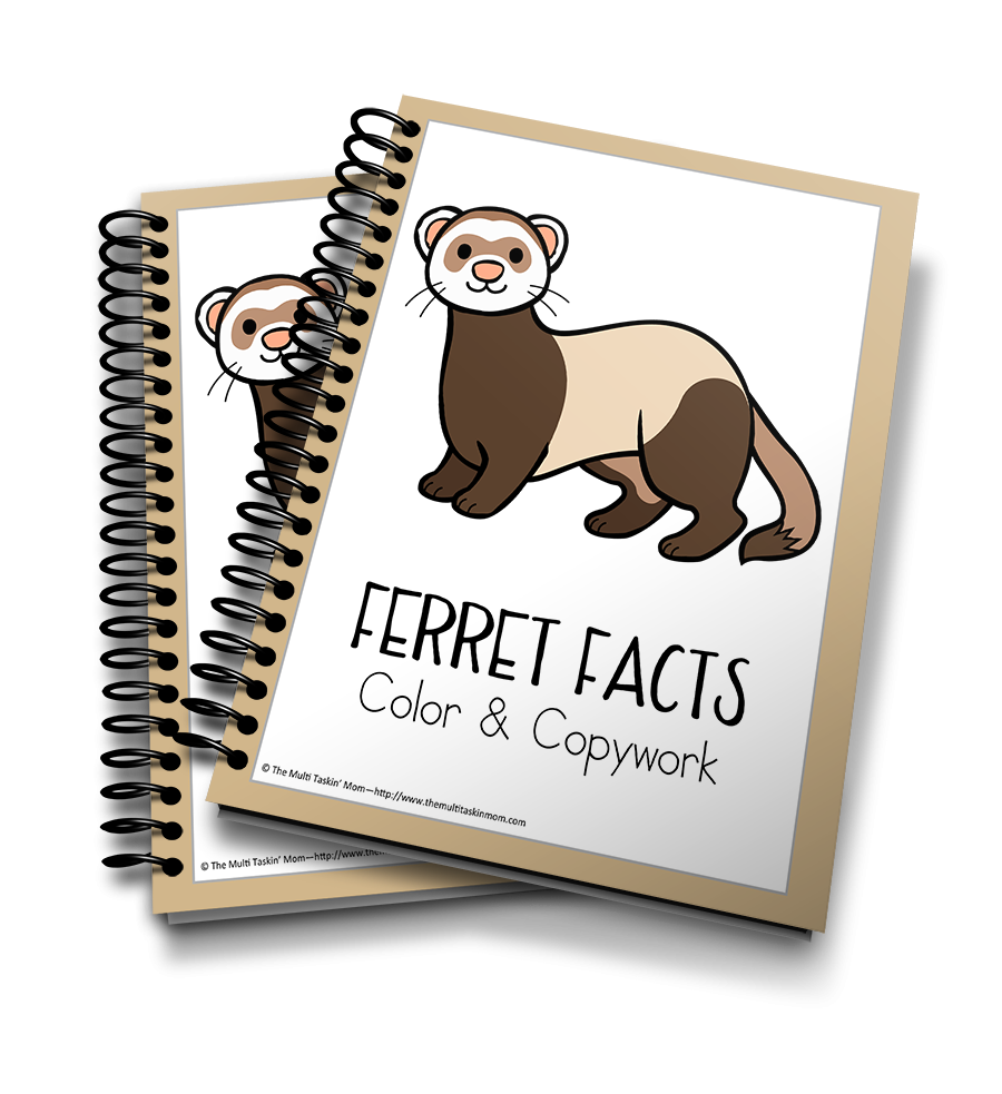 Ferret Facts Color & Copywork
