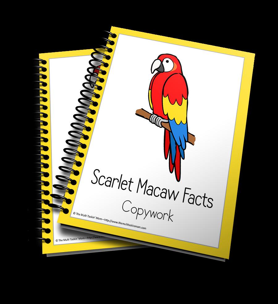 Scarlet Macaw Copywork (Copy)