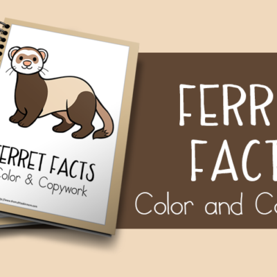 Ferret Facts Color and Copywork