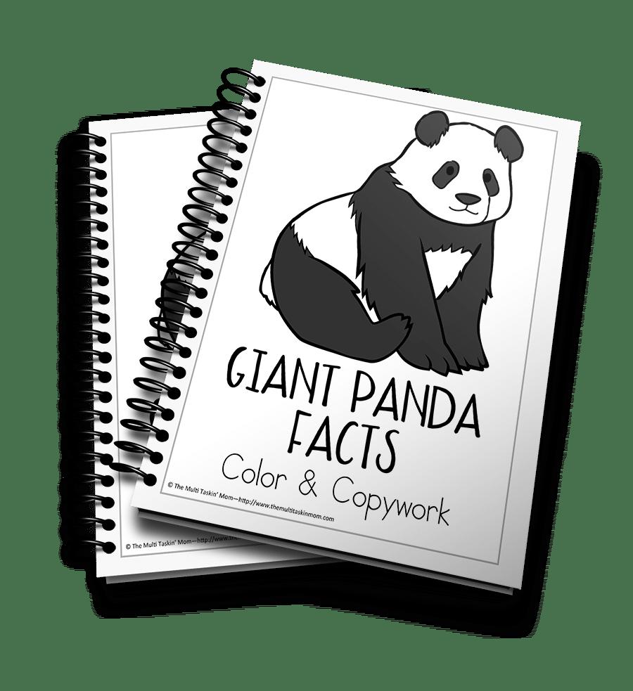 Giant Panda 3D