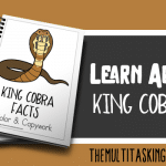 King Cobra Facts Color and Copywork