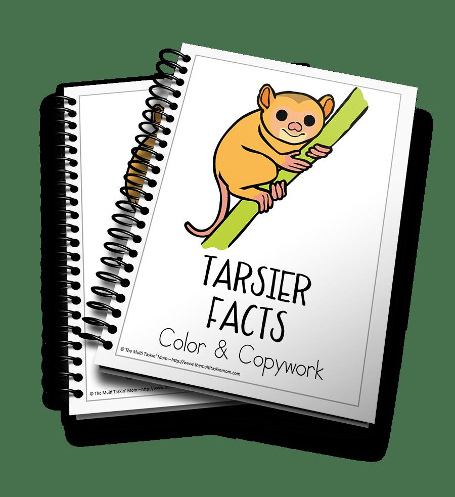 Tarsier Facts 3D