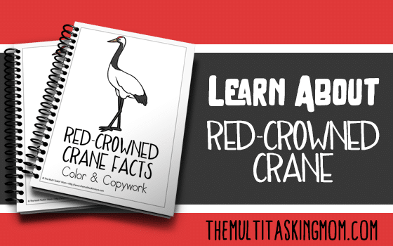 Red-Crowned Crane Facts Color and Copywork
