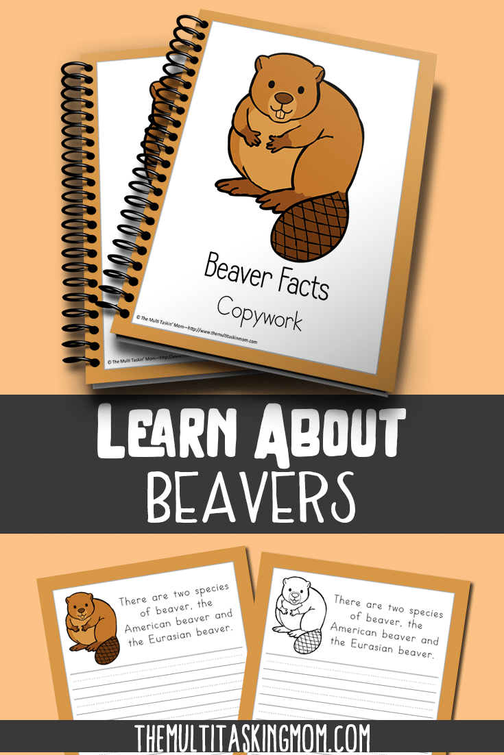 Learn about the beaver with this fun Color and Copywork pack