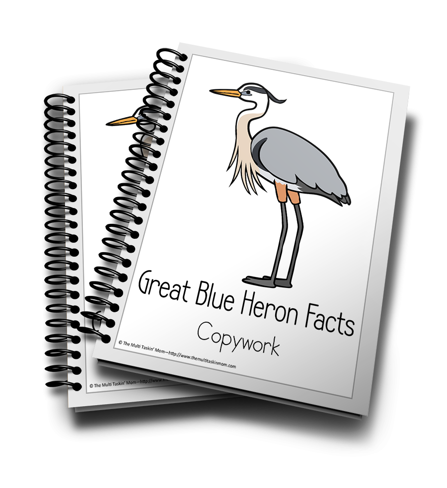Great Blue Heron Color and Copywork