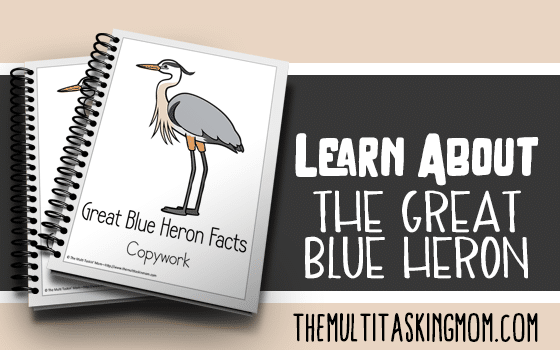 Great Blue Heron Facts Color and Copywork