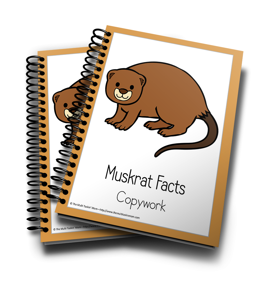 Muskrat Color and Copywork