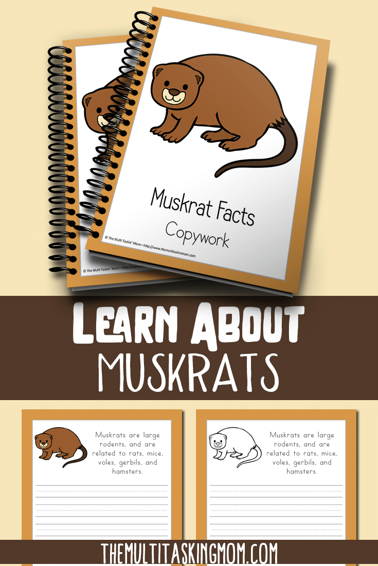 Teach your children with this easy color and copywork pack featuring the Muskrat.