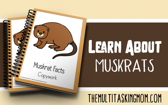 Muskrat Facts Color and Copywork
