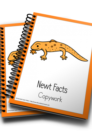 Newt Color and Copywork