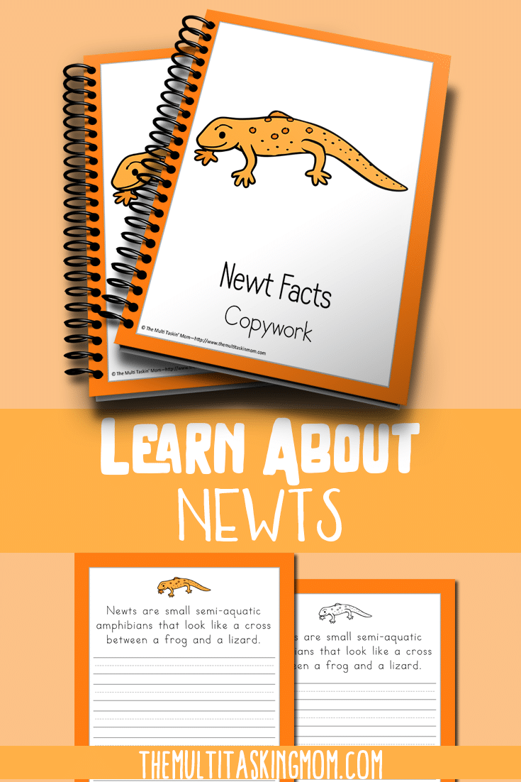 Newt Facts Color and Copywork