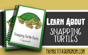 Snapping Turtles Color and Copywork available now