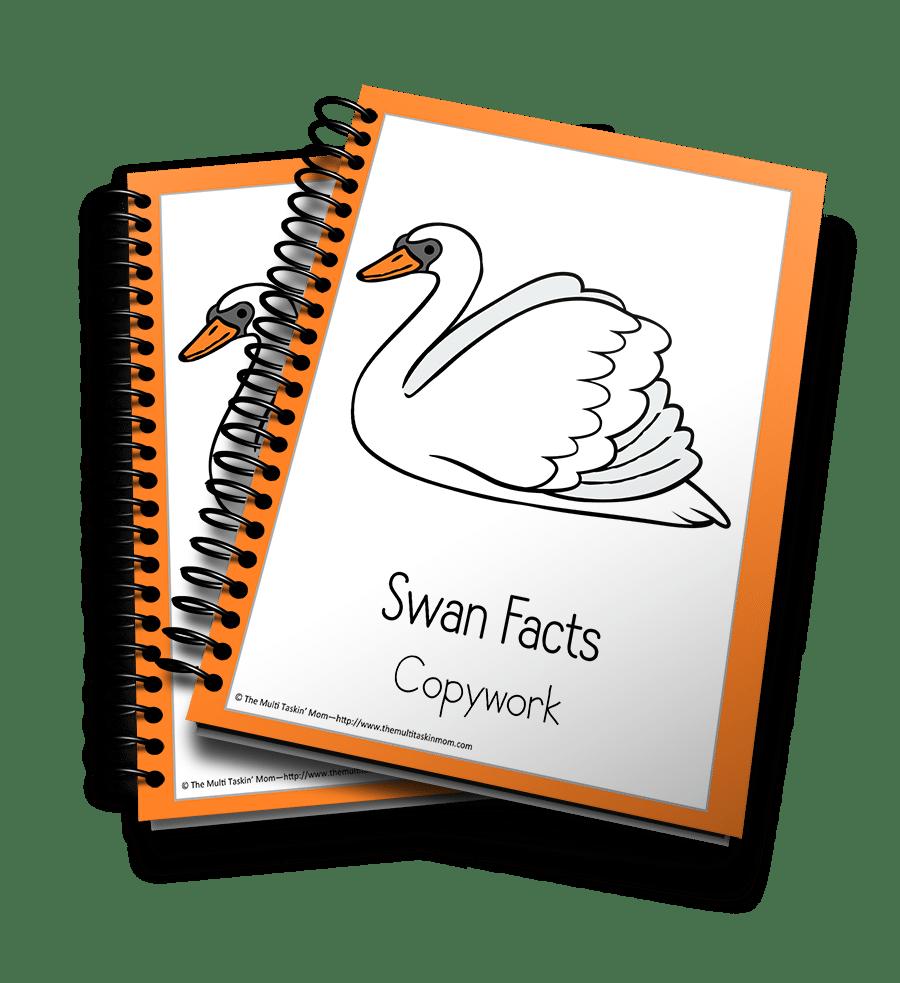 Swan Copywork 3D