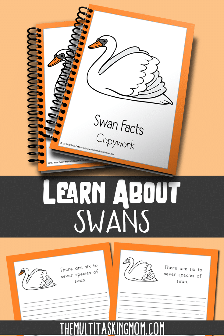Learn fun facts about the swan with this color and copywork pack.