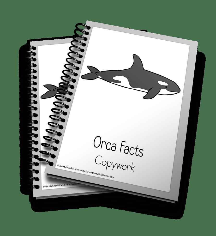 Orca Copywork 3D