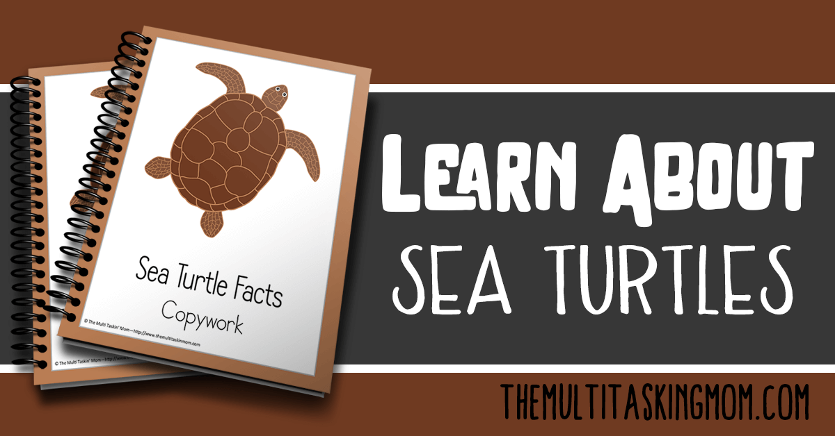 Sea Turtle Facts Color and Copywork