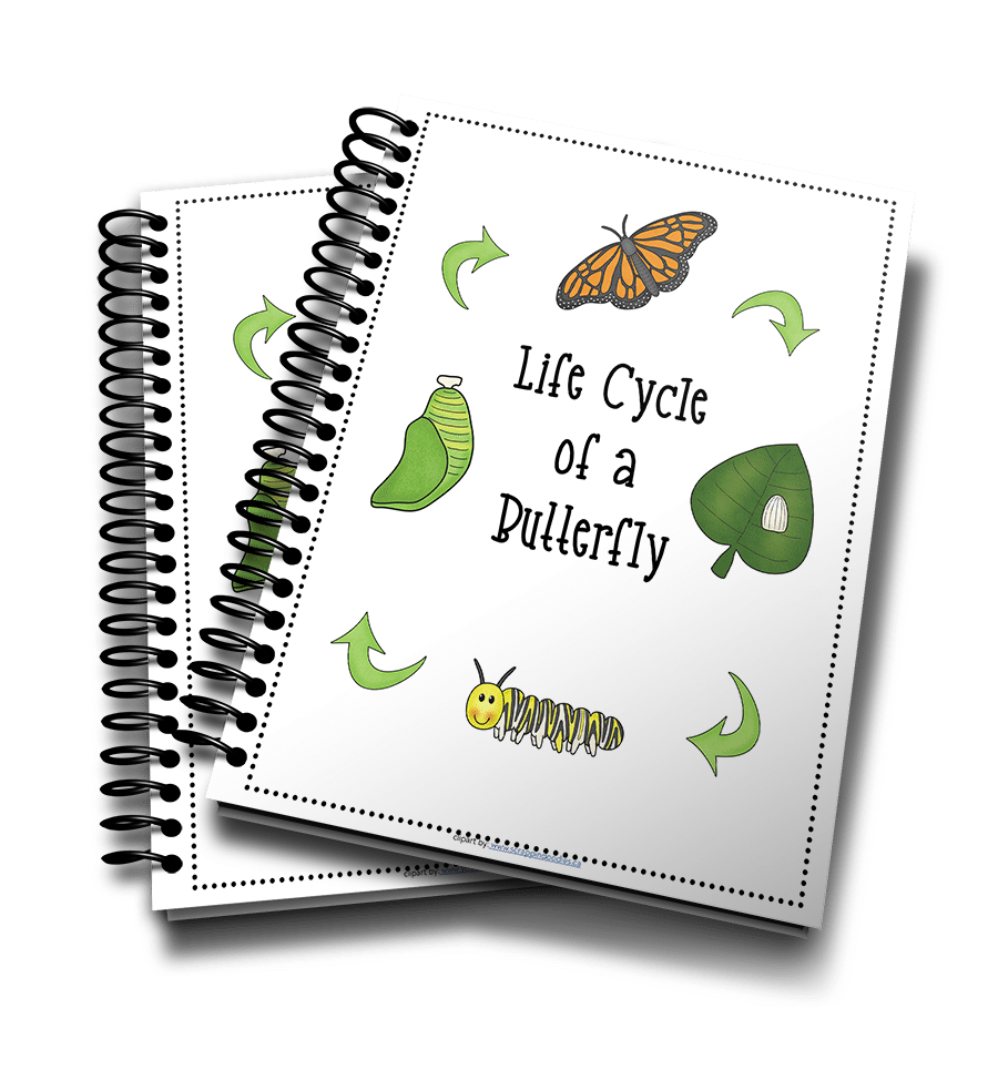Butterfly Life Cycle 3D