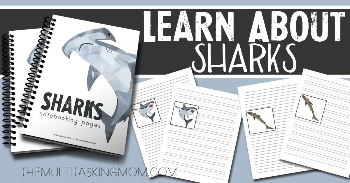 Sharks Notebooking Pages