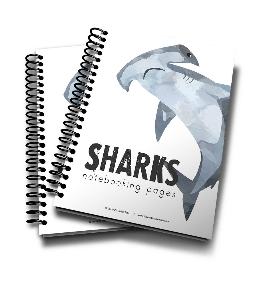 Sharks Notebooking Pages 3D